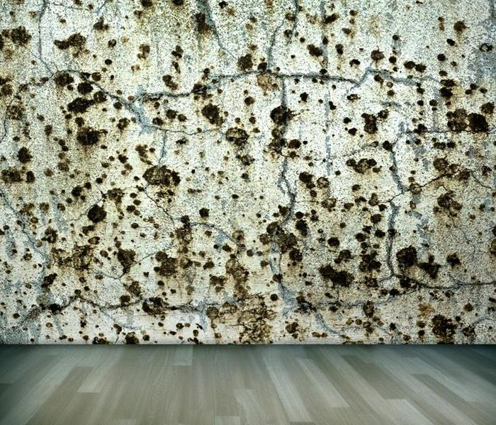 Mold Remediation You Never Expected Mold to Be so Costly